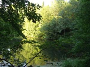 Старинный пруд в Григорове. Фото автора.